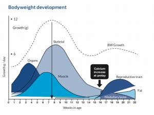 Pertumbuhan Periode Starter Grower